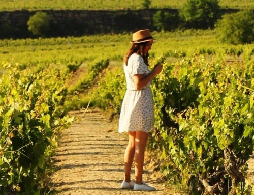El Día Mundial del Enoturismo, mejor en Rioja Alavesa