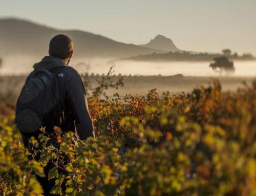 El Camino Ignaciano también se disfruta en Rioja Alavesa