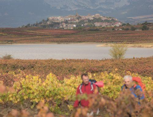 La Ruta del Vino y del Pescado en Rioja Alavesa