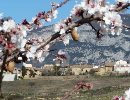Algo ocurre en Rioja Alavesa cuando empieza febrero