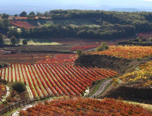 Las mejores fotos del otoño se hacen en Rioja Alavesa