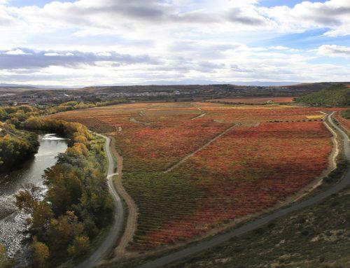 Los 10 imprescindibles para descubrir Rioja Alavesa